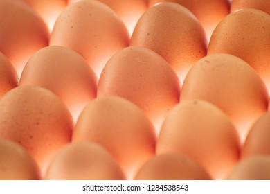 Plenty eggs in array