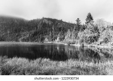 Plesne Lake and Plechy Mountain in autumn. Sumava National Park, Czech Republic. Black and white image.