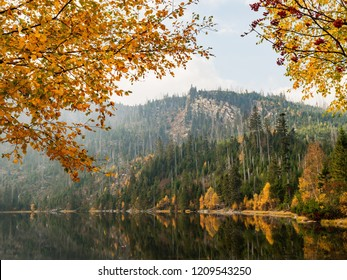 Plesne lake in Sumava national park (Bohemian Forest) in autumn. Czech republic