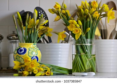 A  plethora of daffodils on the kitchen counter  will brighten up any room reminding us that Spring is here.