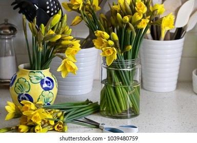 A plethora  of daffodils on the kitchen counter ready to bring a breath of Spring  time where ever they're  placed.