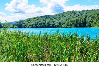 PLITVICE LAKES, CROATIA - 29 JUNE 2017. Reservoir in the reeds on the territory of the Plitvice Lakes National Park.