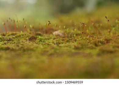 Plocha Kor is one Small plant  - Shutterstock ID 1509469559