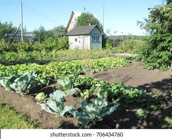 Plot of land for vegetables