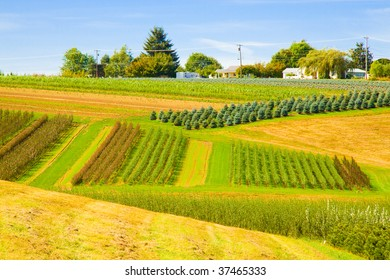 Plots of land are used to grow trees in an orderly fashion.