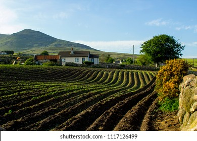 A ploughed field ready for seed sowing on the foothills of the Mourne Mountains near Annalong in County Down Northern Ireland