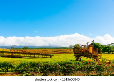 Plow on a tropical pineapple plantation