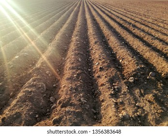Plowed agricultural land, furrows. Dry field. Rural landscape to the horizon without sowing. European agriculture, Spain.