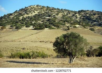 Plowed farmland in North Cyprus