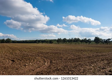 Plowed Field by the Forest