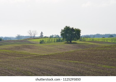 Plowed field during the springtime