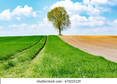 Plowed field and green meadow with a tree