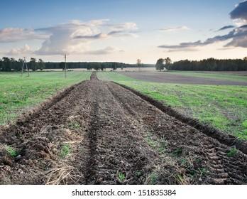 plowed field. landscape