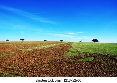 plowed field at south of Portugal, Alentejo region