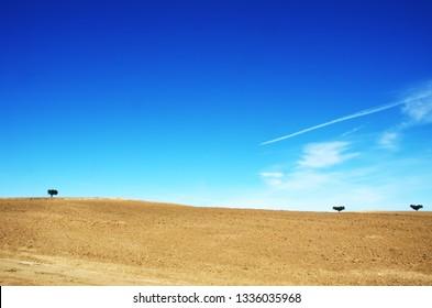 plowed field and trees at Alentejo region, Portugal