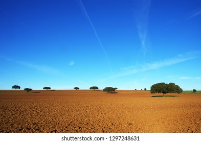 plowed field and trees at south of Portugal
