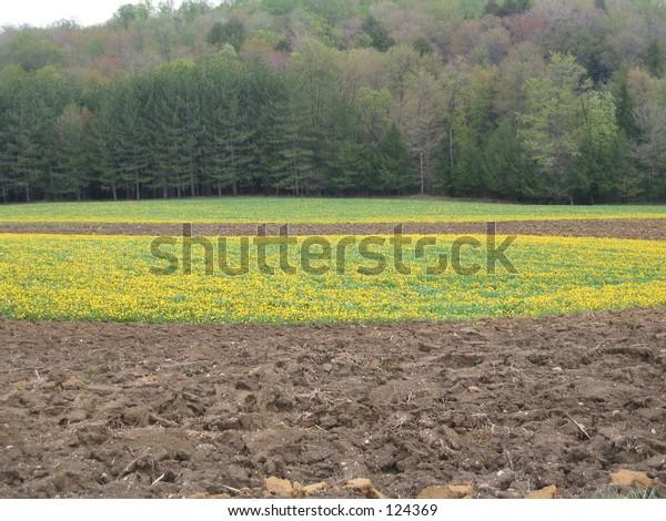 plowed flowery field