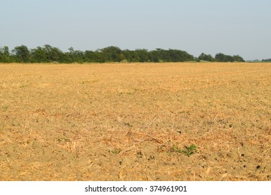 It plowed into the soil straw. The methods of agricultural cultivation.