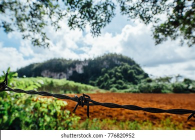 Plowed red earth. Around the greens and trees. Barbed wire in focus, against the background of the field. Private property, protection of agriculture.