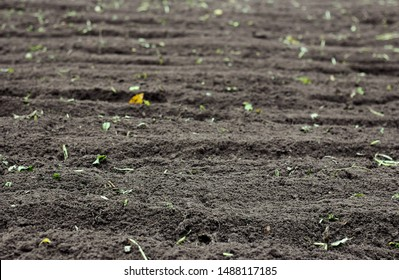 Plowed soil in the vegetable garden, a piece of land tilled after sideration with rape plant, empty mockup background for your design, copy space, closeup, autumn agriculture farming concept