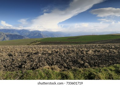 Plowed terrain with bean crop on the background