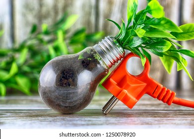 Plug and plant growing inside the light bulb. Green eco energy concept.