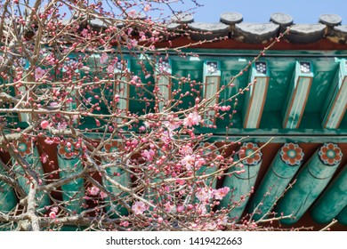 plum blossom and dancheong(traditional multicolored paintwork on wooden buildings)