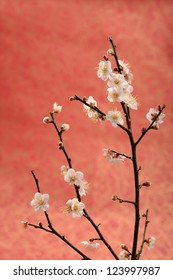 plum blossom on red  background