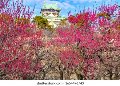 Plum blossoms and Osaka Castle in Osaka, Japan