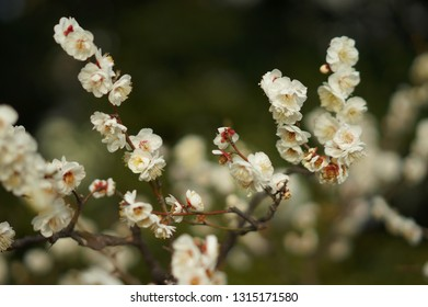 Plum and flower at Tokyo