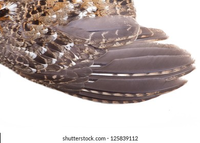 plumage of a hazel grouse close up, forest pattern