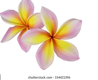 Plumeria is a beautiful Thai flower.