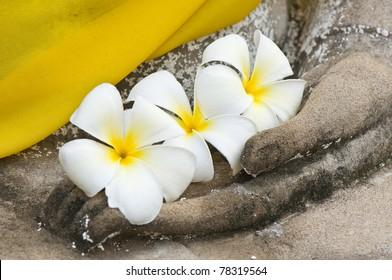 plumeria flower on ancient hand of buddha statue