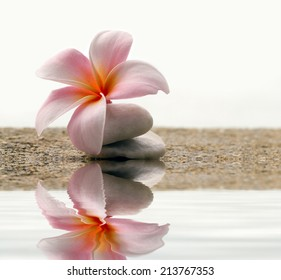 plumeria flower on the stone