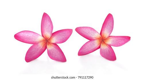Plumeria flower on white background.