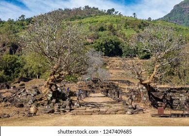 Plumeria flower trees at the ruins of the Vat Phou Khmer temple, nouned world heritage by UNESCO and also know as the small Angkor Wat, Laos