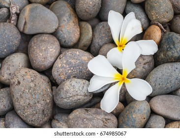 Plumeria flowers with gravel backdrop.