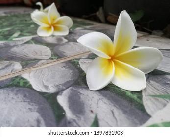 plumeria flowers that fall on the tile floor