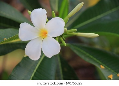 5 petals jasmine images stock photos vectors shutterstock the plumeria has five petals yellow middle outside white mightylinksfo