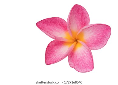 Plumeria isolated on white background. Nature pattern of blossoming color exotic Frangipani flower, Close up of Plumeria or Frangipani.