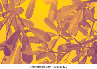 Plumeria leaves over sky , Vintage style (Gold Duo Tone)