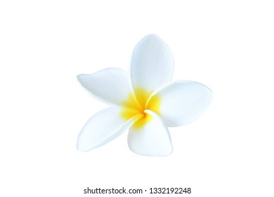 Plumeria on white background with clipping path.