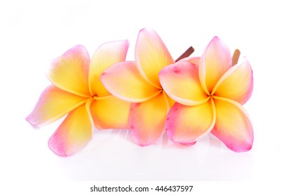 plumeria rubra flower isolated on White background
