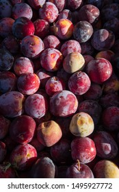 plums at farmers market organic produce
