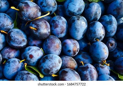 Plums, a lot of very beautiful blue plums, between plums some leaves, background.