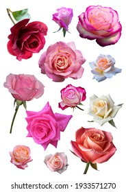 PNG ROSE FLOWERS SWEET CUT