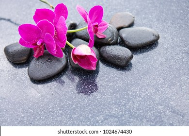 Pnk orchids and black stones close up.