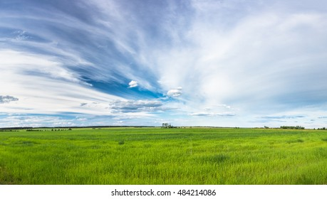 Pnorama Of Green Field In Spring Season. Agricultural Rural Landscape At Evening. Copy Space On Sunny Blue Sky Background.