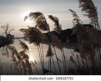 Po Delta, Italy.  Canal, marsh plants, sunset landscape.