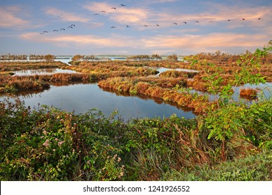 Po Delta Park, Veneto, Italy: landscape of the swamp in the nature reserve with a flock of pink flamingos in the lagoon of Rosolina, Rovigo